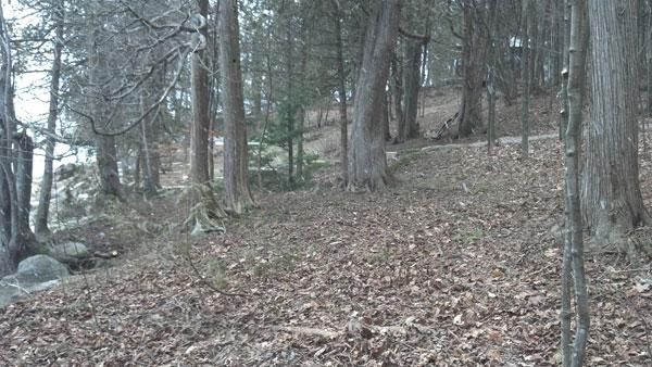 woods_five