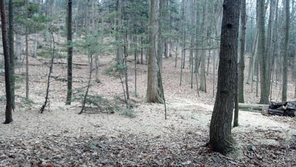 woods_six
