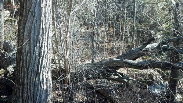 woods_three